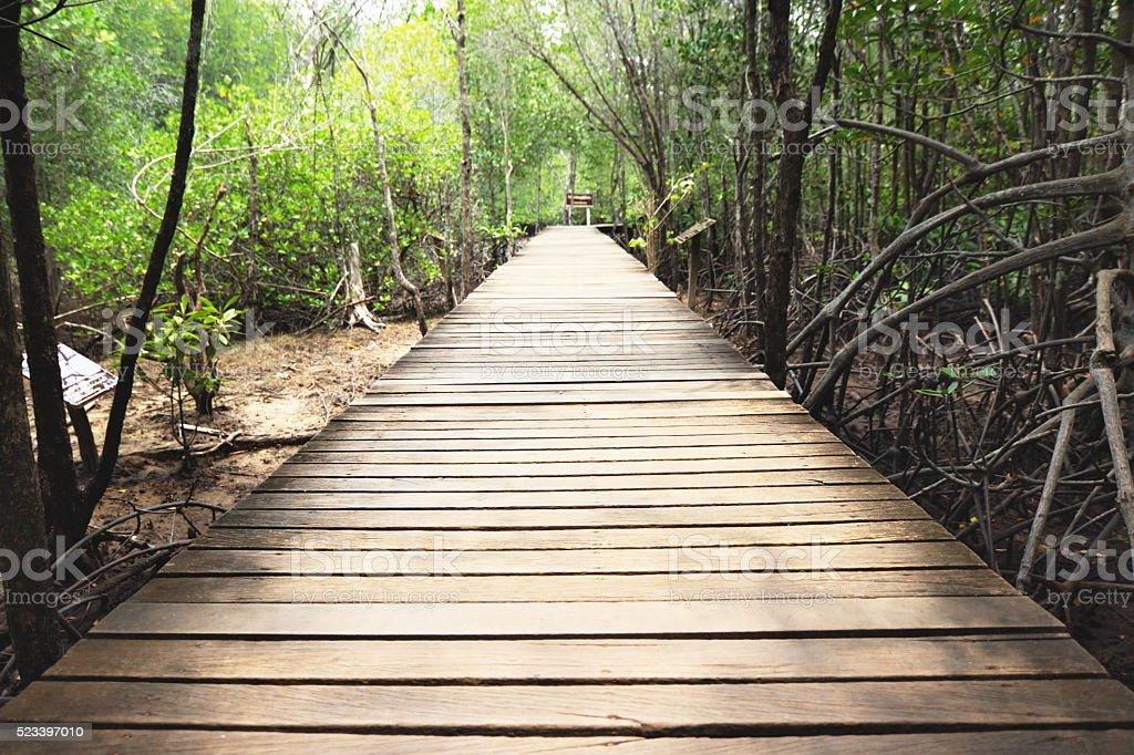 Wooden bridge walkway to mangrove forest stock photo