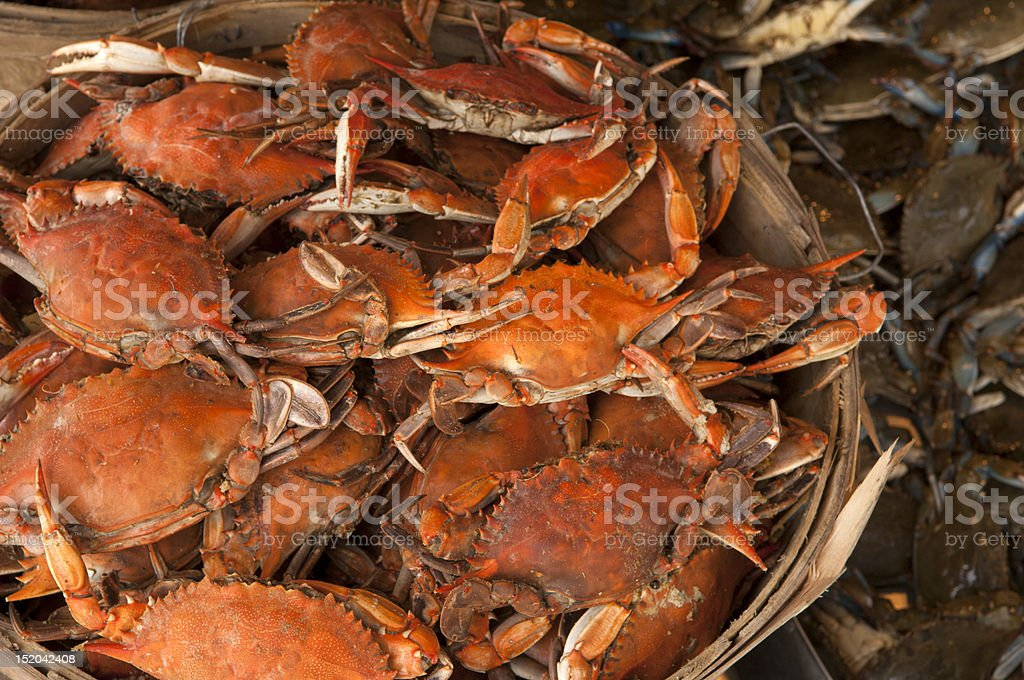 Wooden bucket of large live crabs  stock photo