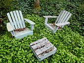 Wooden chairs surrounded by weeds and ivy