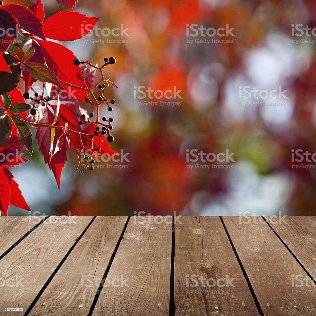 Wooden deck and red ivy flowers stock photo