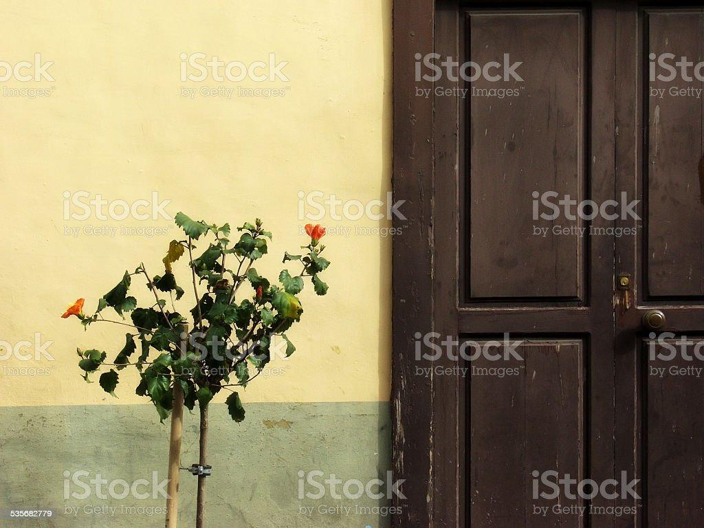 Wooden Door with Plant stock photo