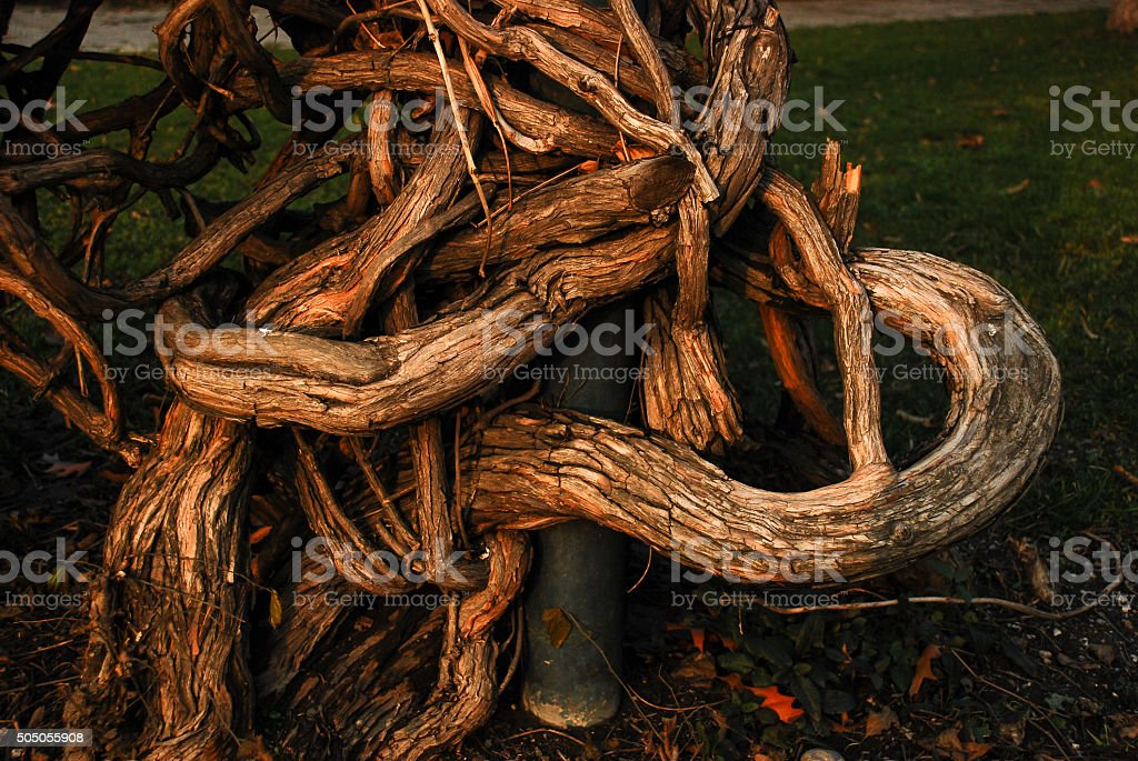 Wooden embrace stock photo