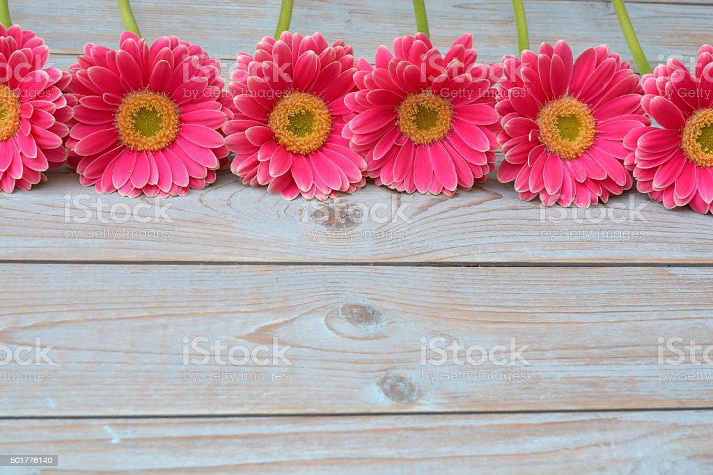 wooden empty room copy space with pink gerbera daisy flowers stock photo