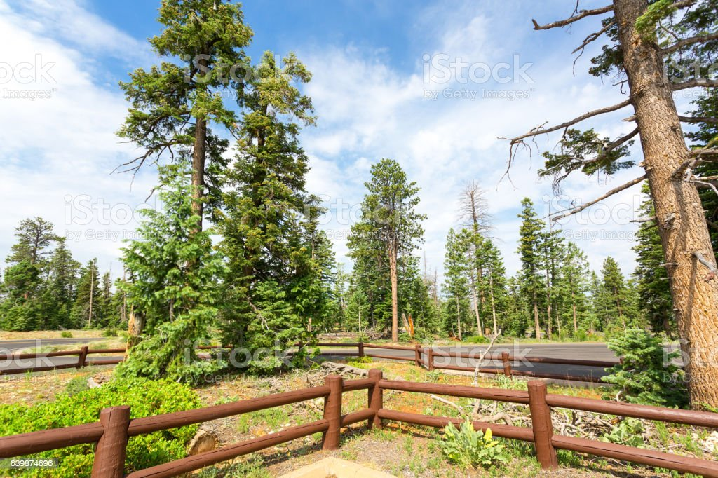Wooden fence and road between pine forest stock photo