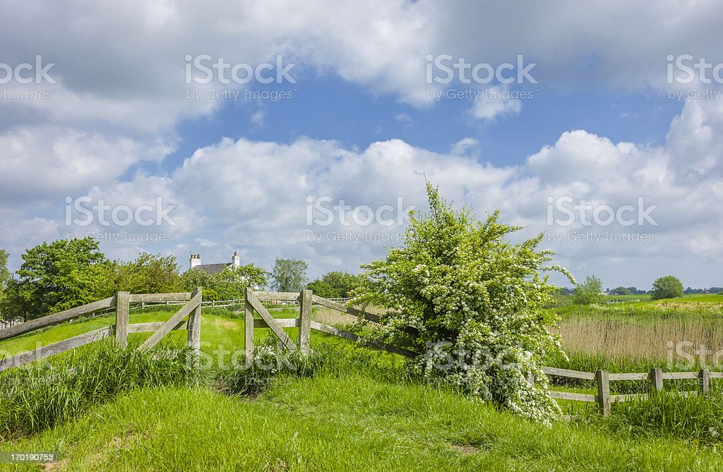 Wooden fence, hawthorn in bloom, reeds, Hull, UK. royalty-free stock photo