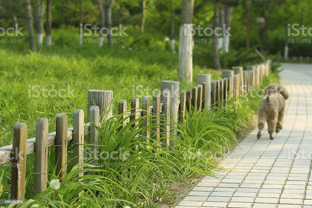 Wooden fence in road side stock photo