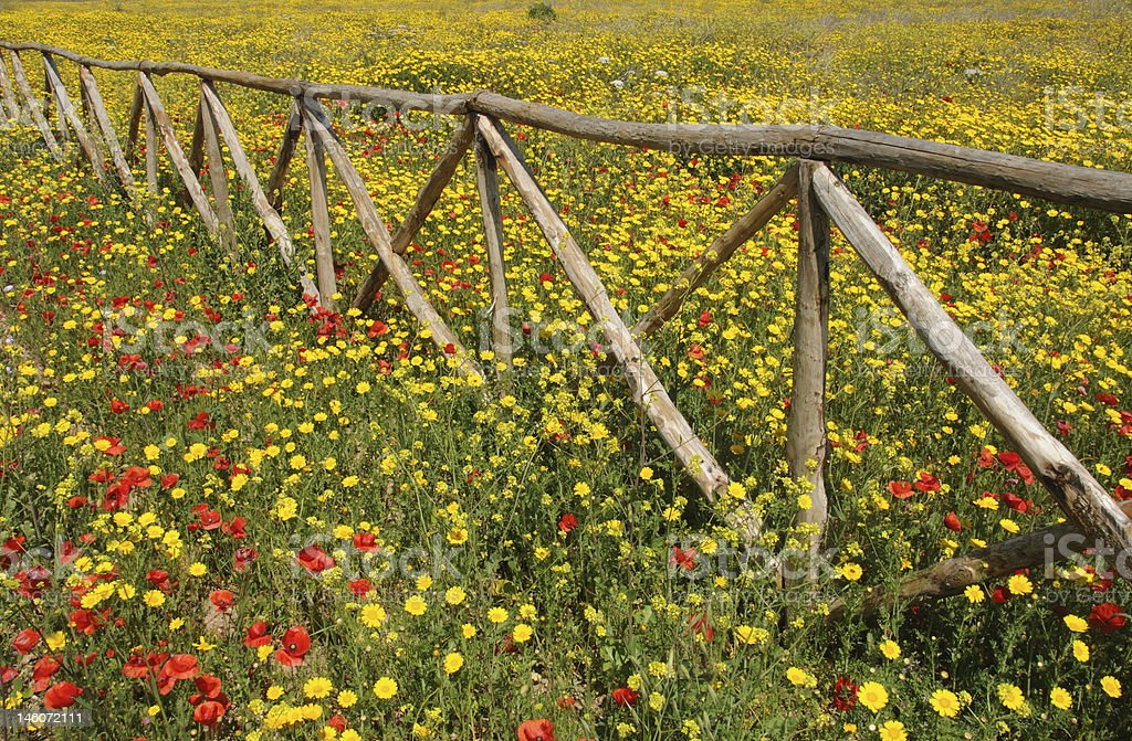 Wooden fence in the field royalty-free stock photo