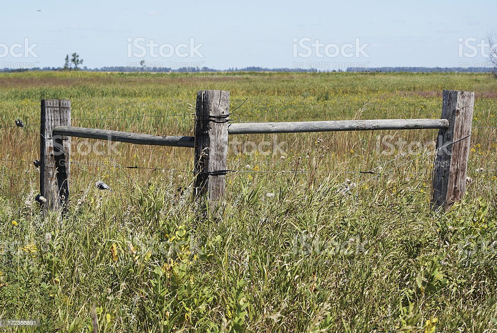 wooden fence posts stock photo