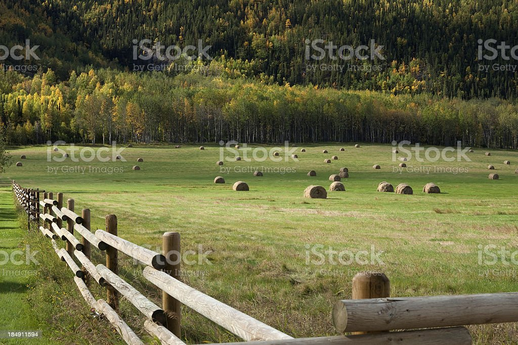 Wooden fence, Rolls of hay in field, autumn-colored forest royalty-free stock photo