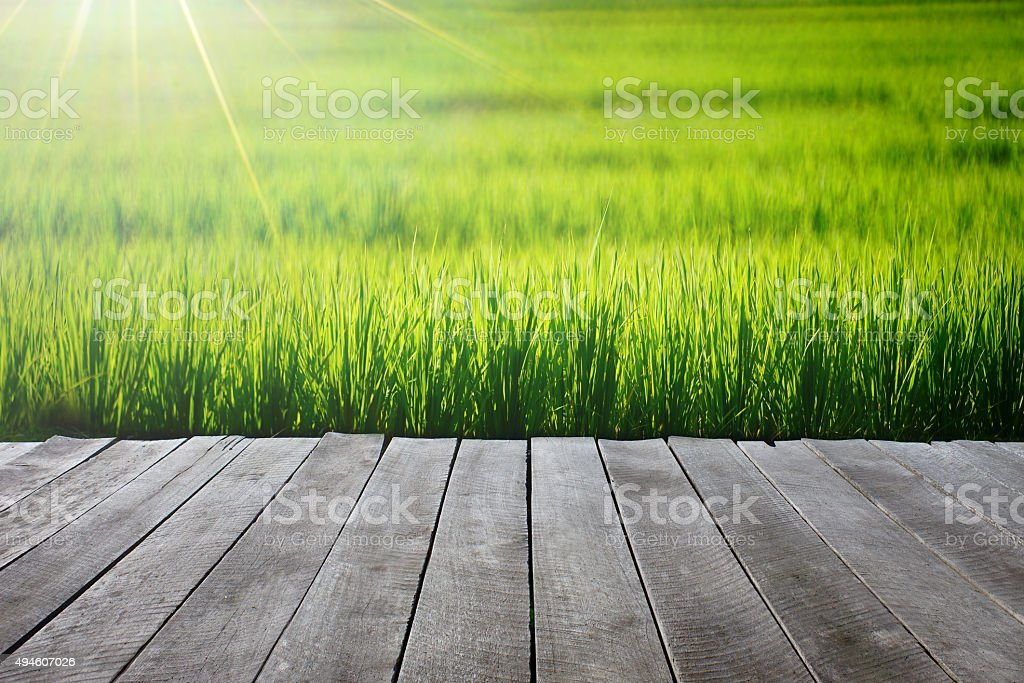 wooden floor with  Rice field stock photo