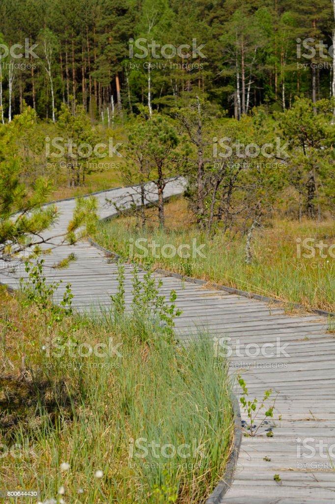 Wooden footbridge stock photo