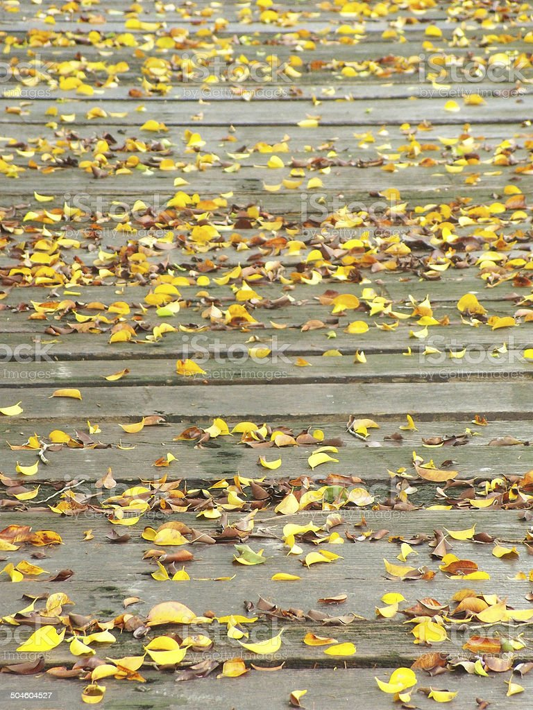 Wooden footpath covered by fallen beech leaves stock photo