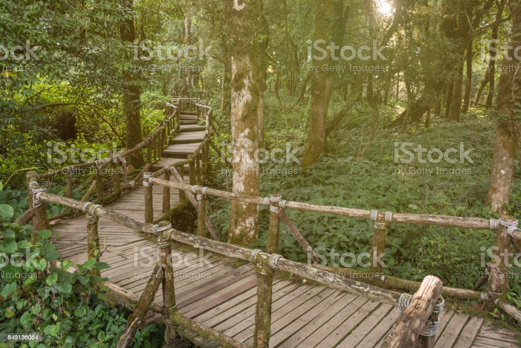 Wooden footpath in Deep tropical rainforest at Doi inthanon national park, Thailand stock photo