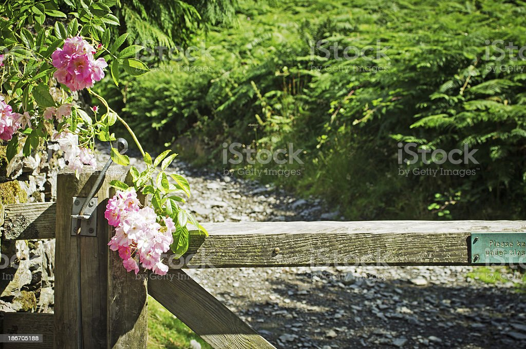Wooden gate and rose stock photo