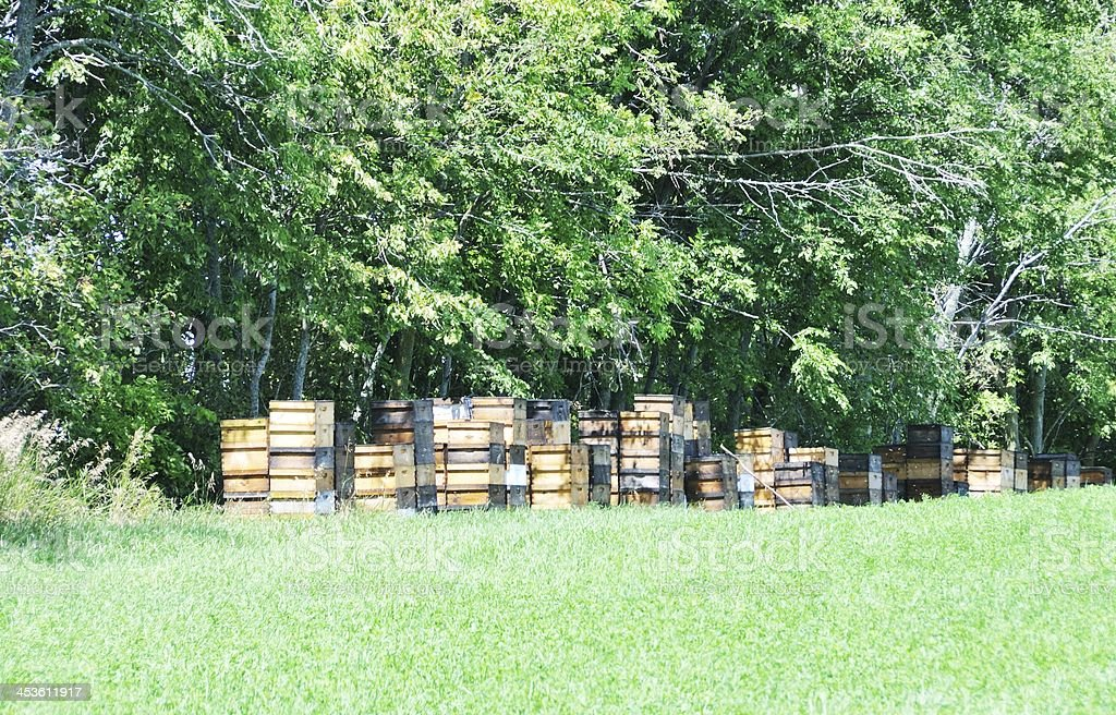 Wooden Hives royalty-free stock photo