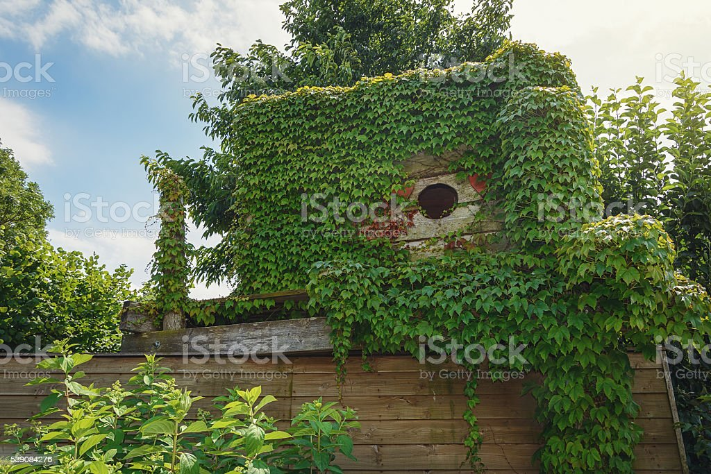 Wooden hut on the roof of a barn overgrown with stock photo