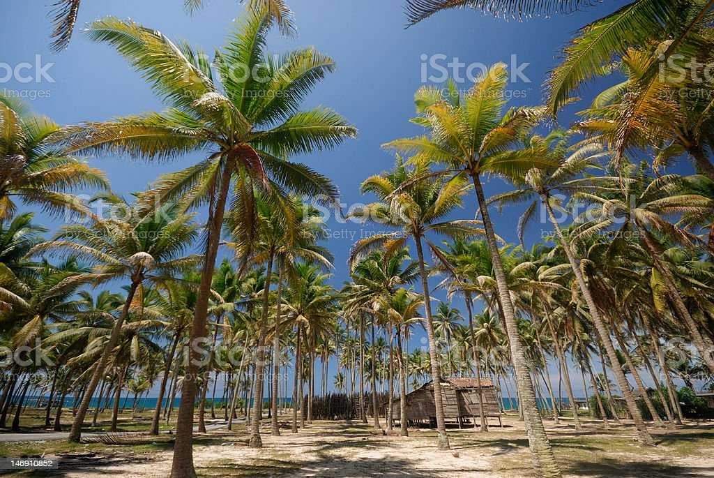 Wooden hut underneath coconut palm trees. stock photo