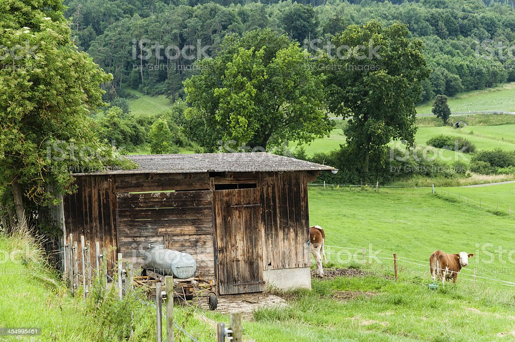 Wooden hut with cows on pasture. Livestock, southern Germany stock photo