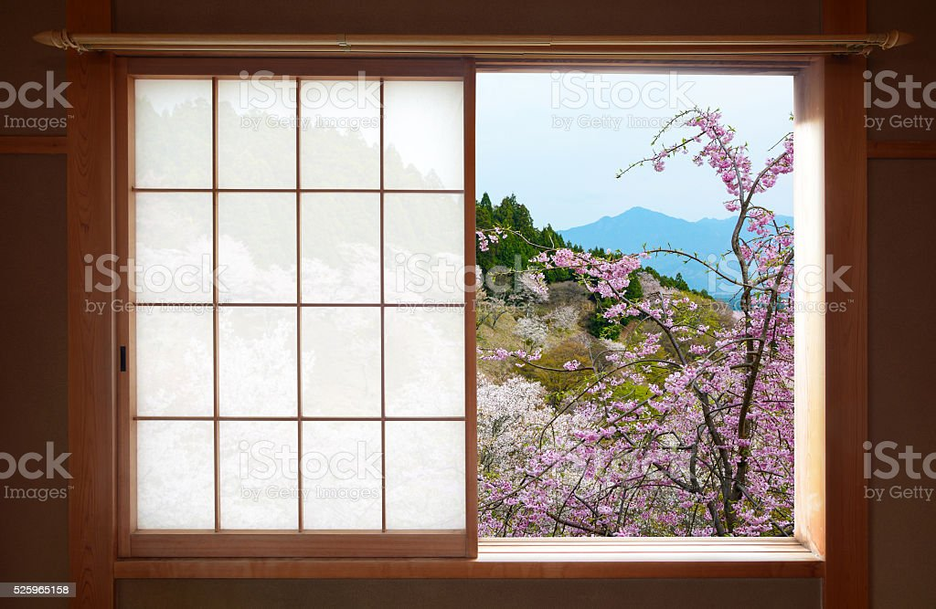 Wooden Japanese sliding window and beautiful weeping cherry tree outside stock photo