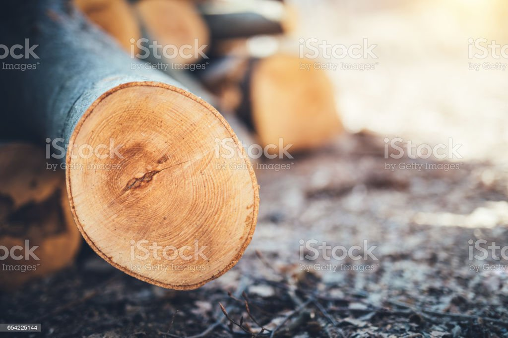 Wooden Logs In The Forest stock photo