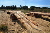 wooden logs like obstacle for test drive