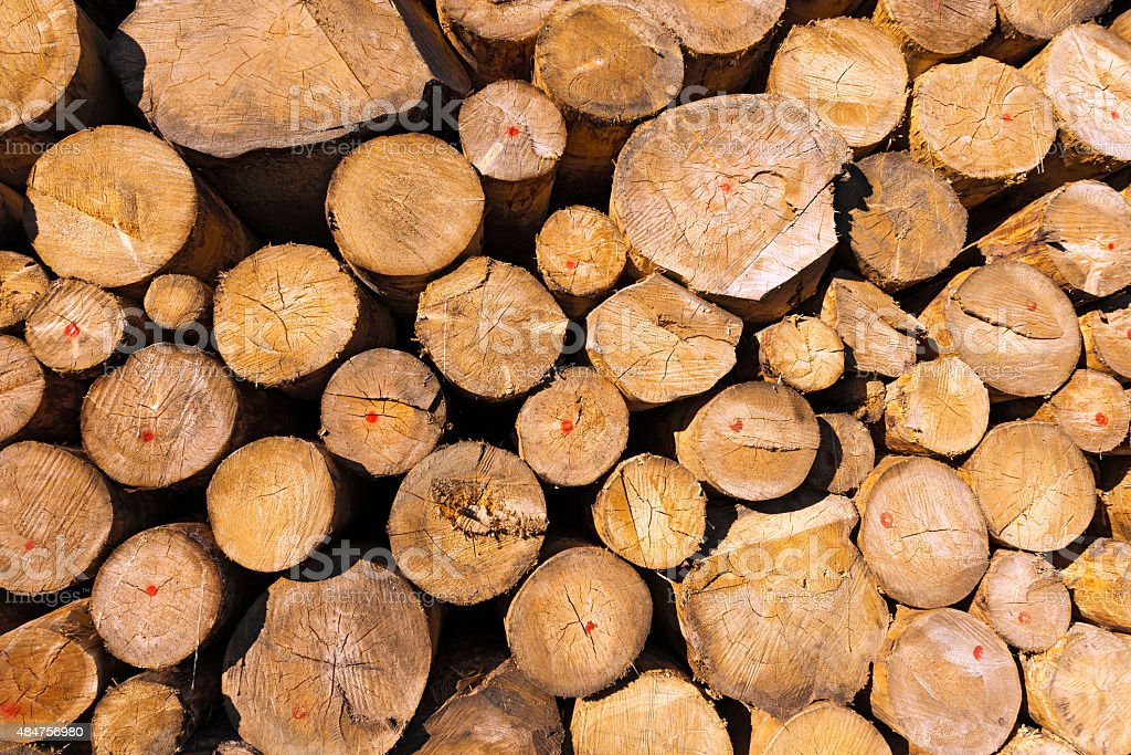 Wooden Logs of Pine Stacked stock photo