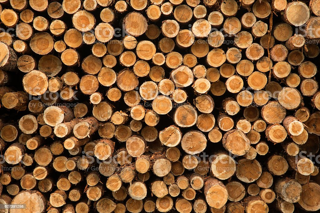 Wooden Logs. Trunks of trees stacked close-up. stock photo