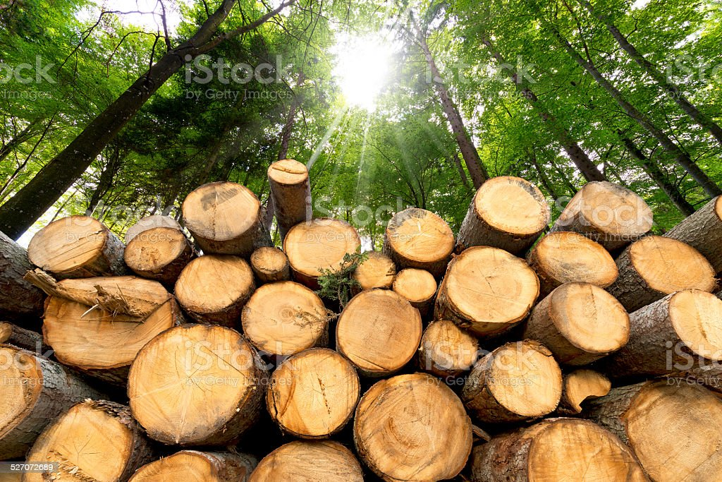 Wooden Logs with Forest on Background stock photo