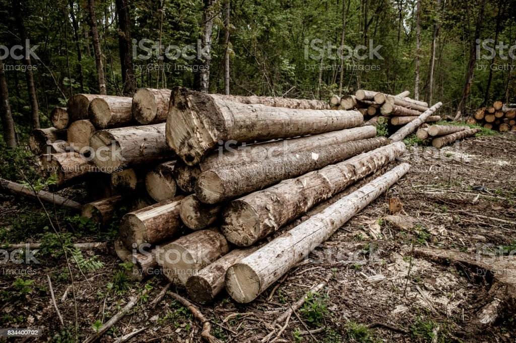 Wooden Logs with Forest on Background  Trunks of trees cut and stacked in the foreground, green forest in the background. stock photo