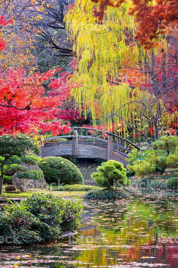 A wooden moon bridge over a stream in Japanese Gardens stock photo