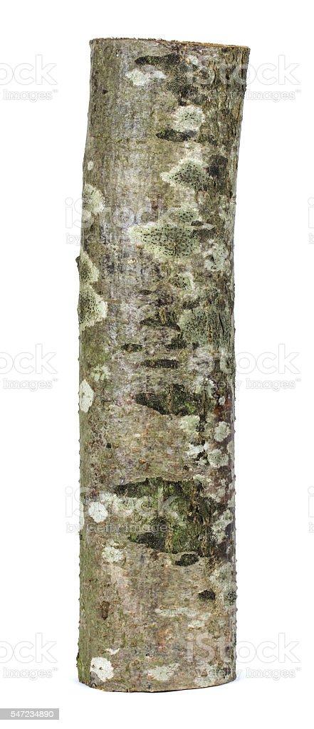Wooden obsolete log stock photo