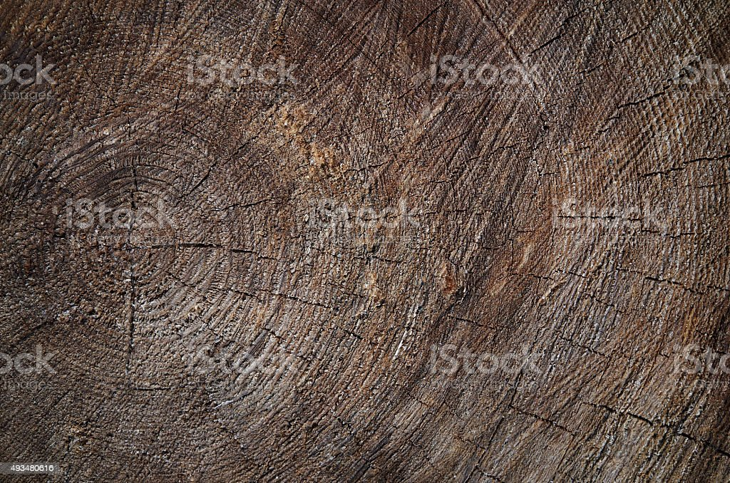 Wooden old tree cut brown texture background stock photo