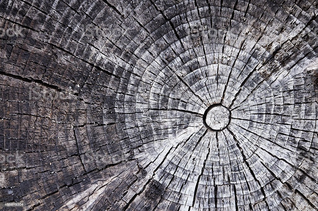 Wooden old tree cut gray texture background stock photo