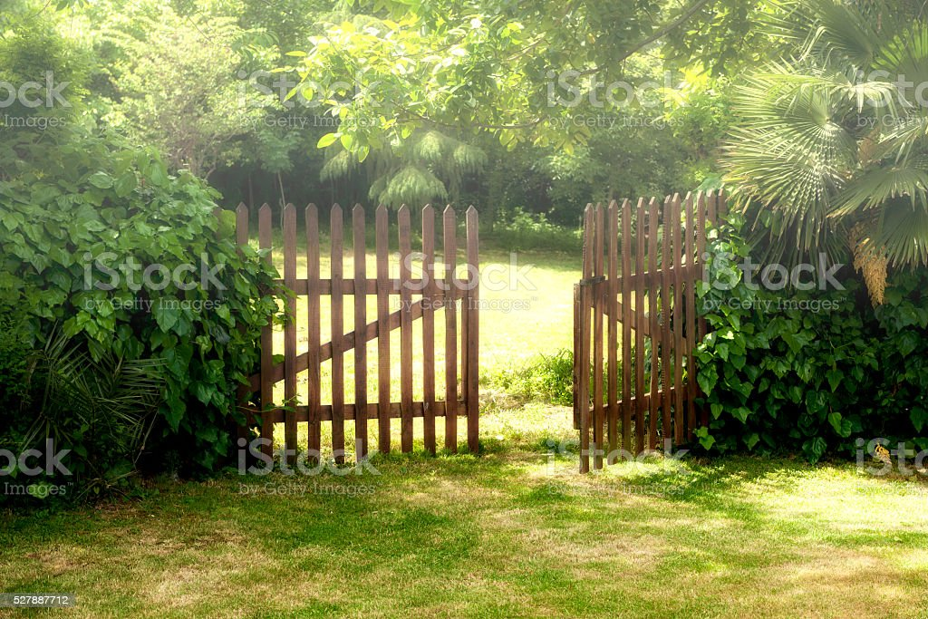 Wooden Open Door and Fog at Garden stock photo