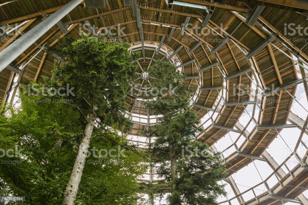 Wooden Path above the trees stock photo