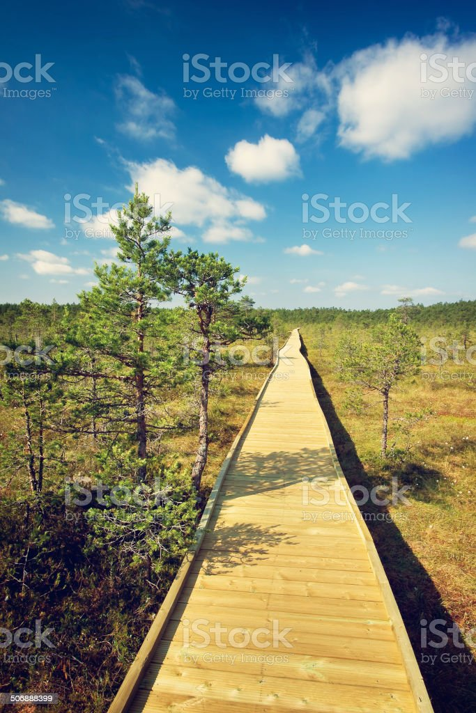 wooden path at bogs stock photo
