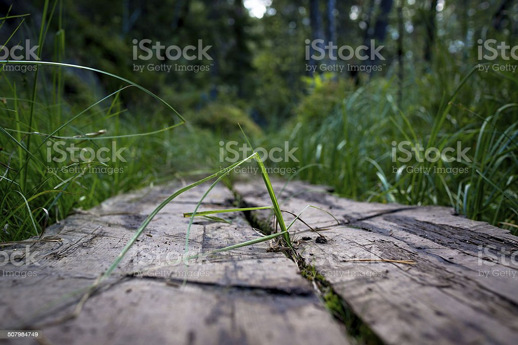 Wooden path in forest - green grass royalty-free stock photo