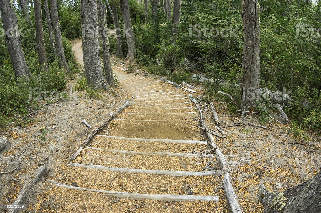 Wooden path in the forest royalty-free stock photo