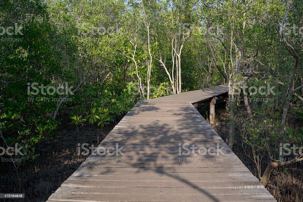 Chemin en bois dans la forêt de mangrove photo libre de droits