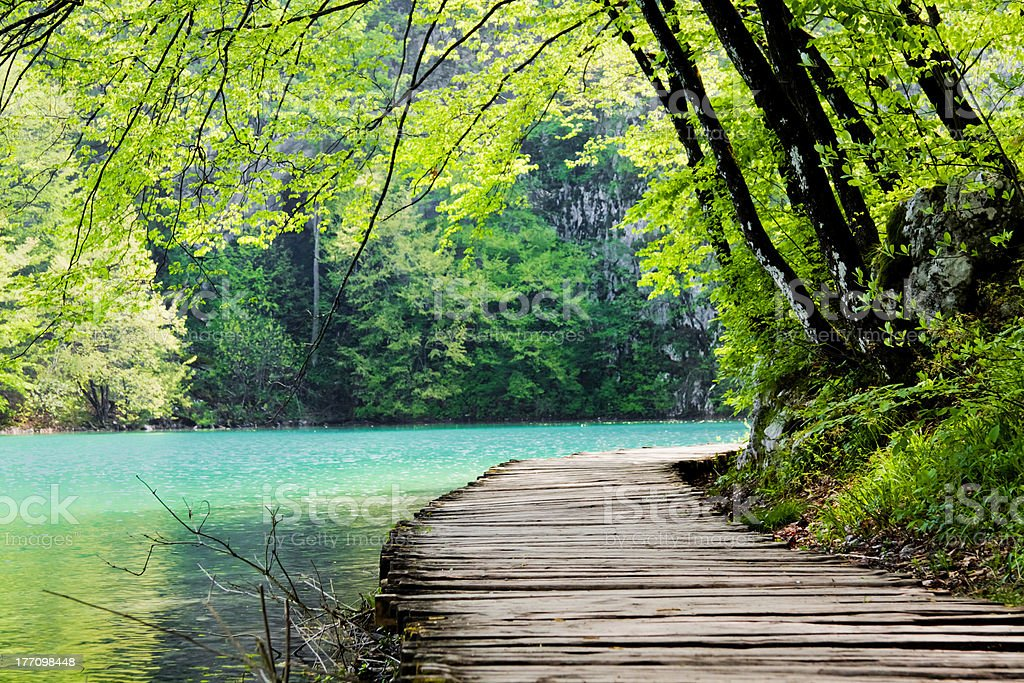 Wooden path near a forest lake stock photo