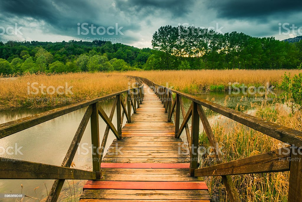 Wooden path on cane thicket and vegetation stock photo