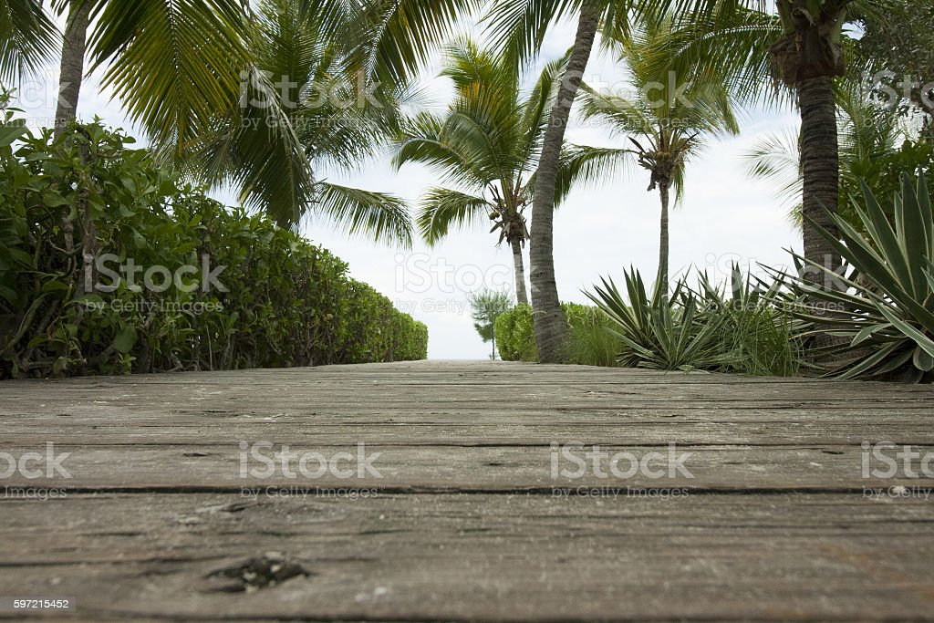 Wooden path surrounded by palm trees in tropical climate stock photo