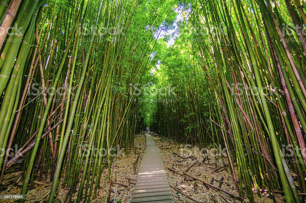 Wooden path through a dense bamboo forest, Maui, Hawaii, USA stock photo