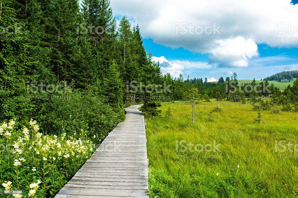 Wooden path through moor in Styria in Austria stock photo