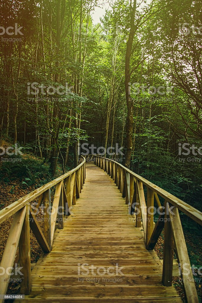 Wooden path to the forest stock photo
