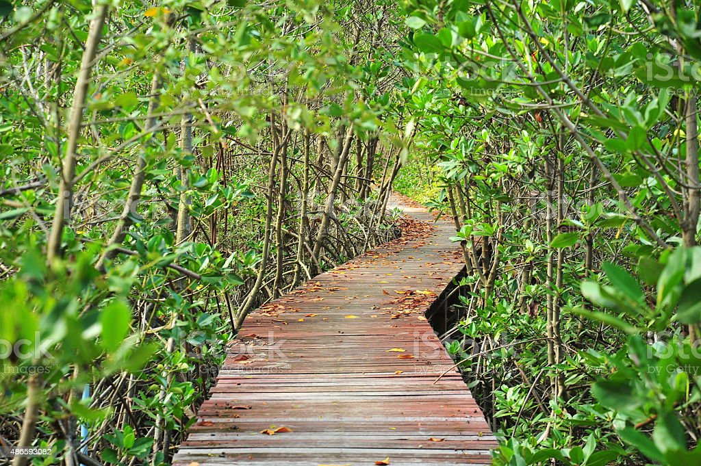 Wooden Pathway in Mangrove Forests stock photo
