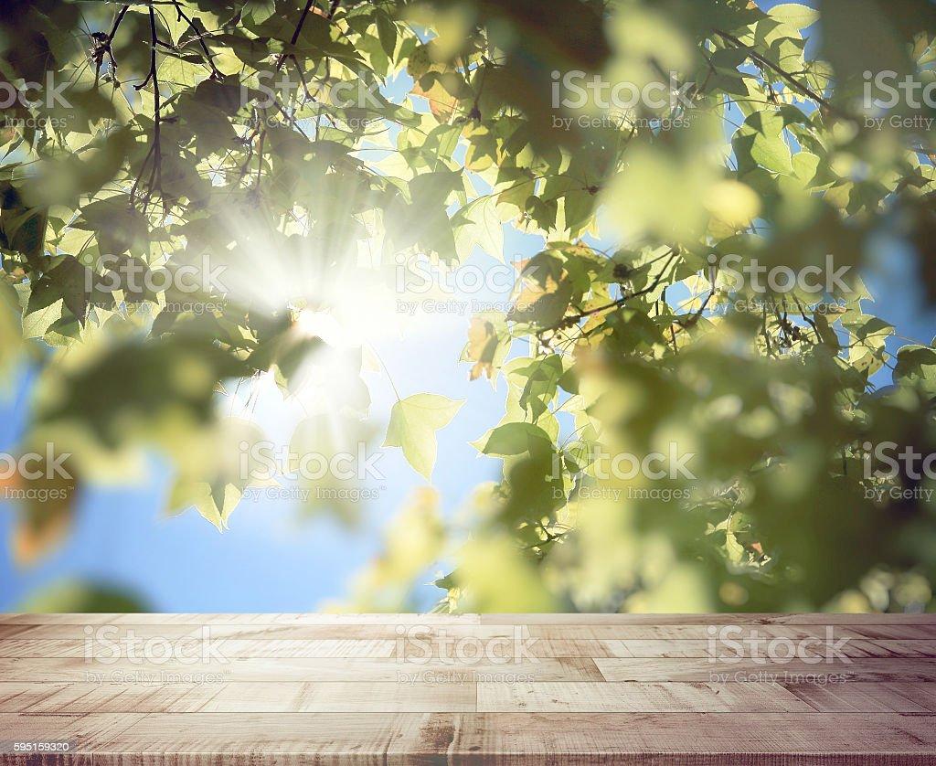 Wooden plank with sunburst shines through the Maple tree. stock photo