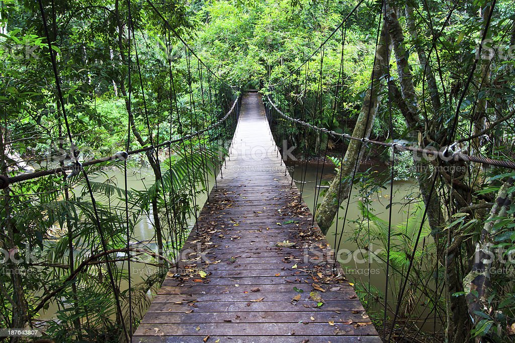 Wooden rainforest hanging bridge stock photo