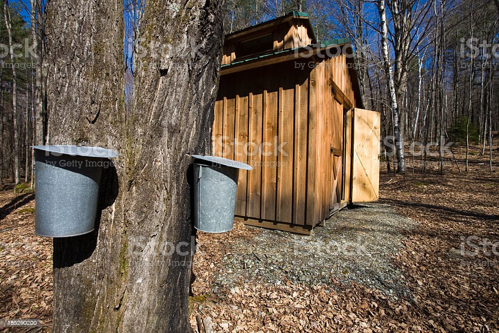 Wooden shed in the woods next to large tree with metal bins stock photo