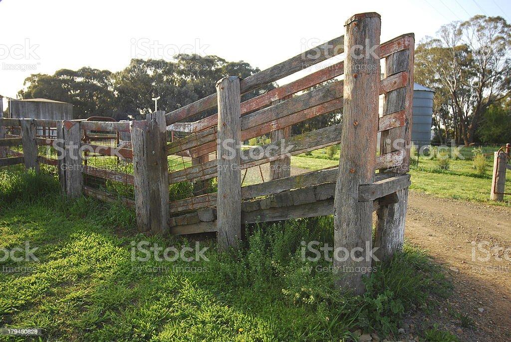 Wooden sheep loading ramp royalty-free stock photo